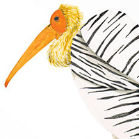 Postcards, Fashion Birds – 2012